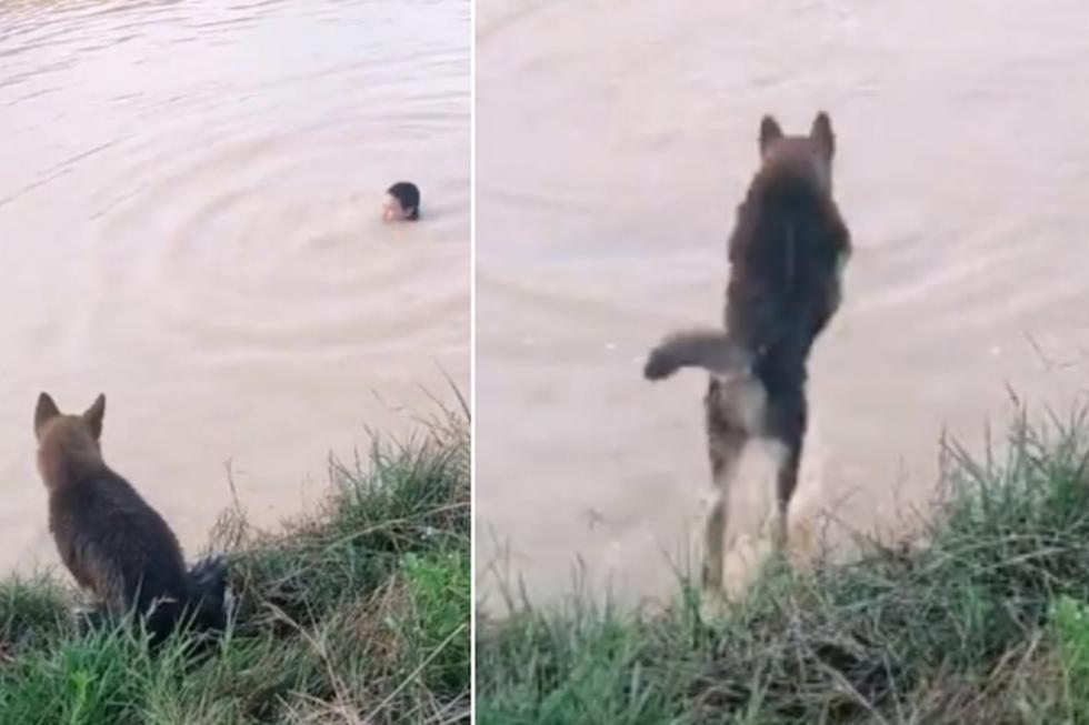 Foto 1 de 3 | El perro no dudó en meterse al agua al ver que su amo se 'ahogaba'. | Crédito: ViralHog en YouTube. (Desliza hacia la izquierda para ver más fotos)