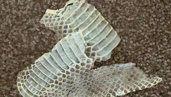 La pareja encontró la piel de una serpiente y metros más adelante los restos de un ratón, todo esto bajo la cama de uno de sus hijos. |Foto: Kayleigh Baldwin - Pierce
