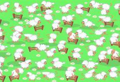 Acertijo visual: Ubica a la gallina en medio de las ovejas