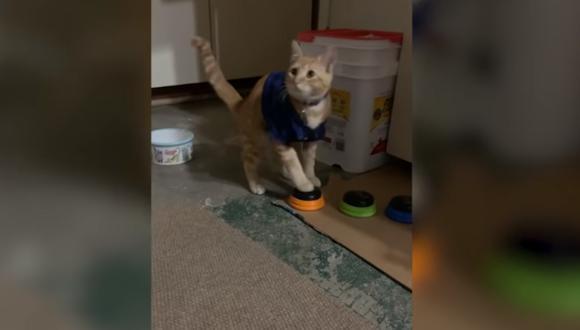 YouTube Viral: gato 'aprende a hablar' con botones e insulta a sus dueños. (Foto: captura)