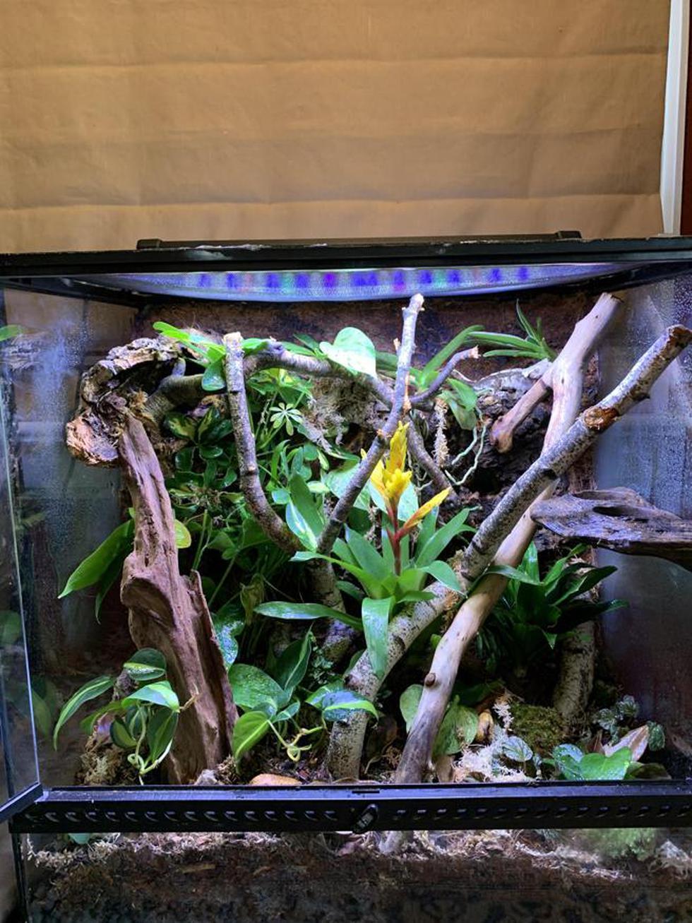 Halla ahora al lagarto oculto y camuflado entre las ramas en solo 10 segundos. (Fotos: Facebook)