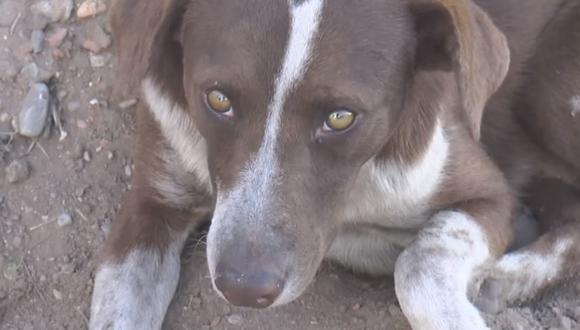 'Cuchufleto' es el nombre de un perro que llora mientras espera la llegada de su dueño fallecido en una mina de México. (Foto: 15 Sabinas / Facebook)