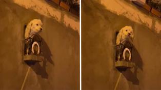 Viral: Dueños crean un balcón personalizado para su engreída perrita en Bolivia