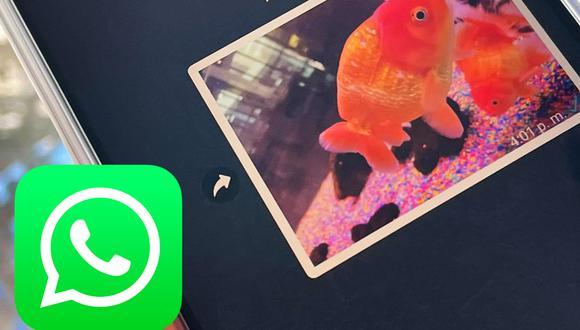 Recupera tus fotos borradas de WhatsApp en un instante con este sensacional método. (Foto: Depor)