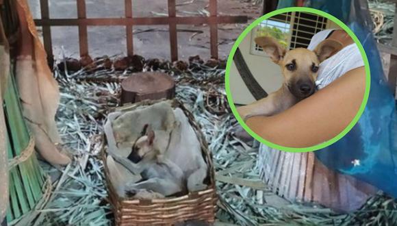 Una foto viral de un perrito profundamente dormido en un pesebre conquistó los corazones de más de un amante de las mascotas en las redes sociales. | Crédito: @MtyFollow / Twitter.