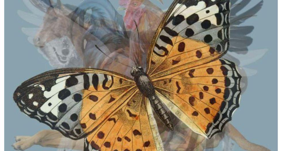 La mariposa es una criatura suave y gentil conocida por su belleza. (Foto: web Los40)