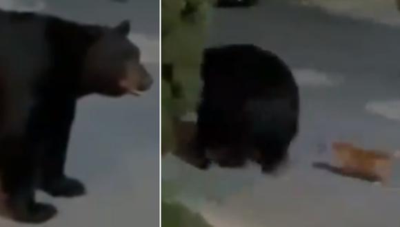 El enorme oso dio media vuelta al ver que el pequeño perro se acercaba ladrándole. (Foto: @MrElDiablo8 / Twitter)