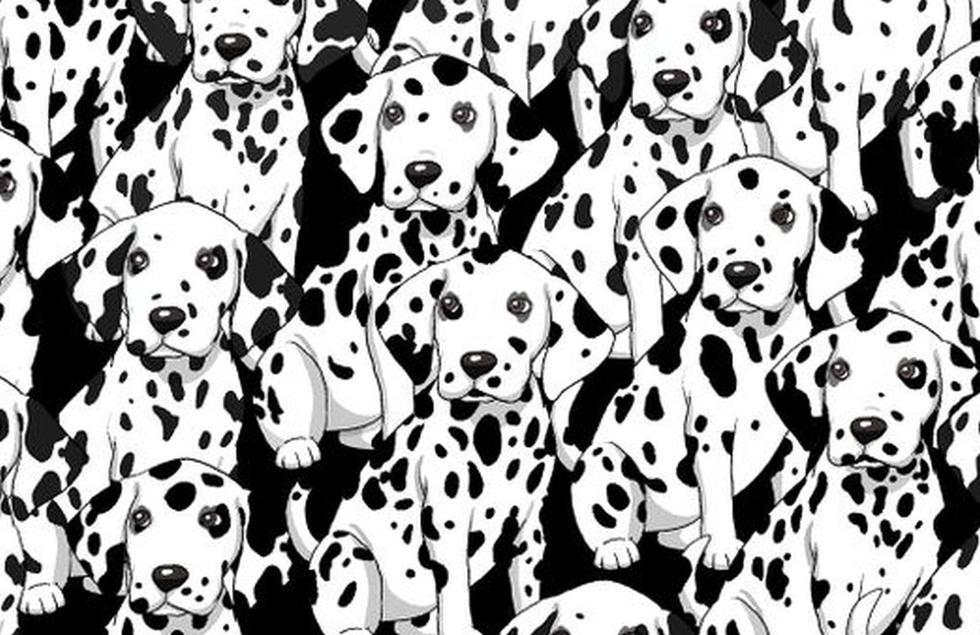 Encuentra al perro distinto entre los dálmatas en menos de diez segundos (Foto: Facebook)