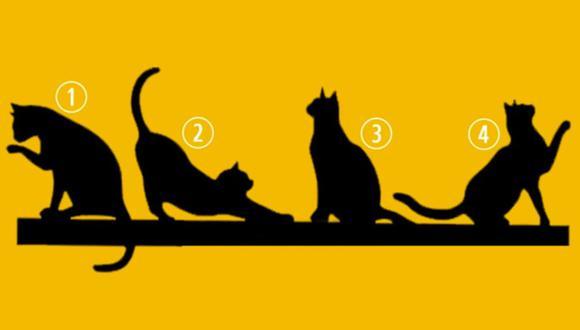 ¿Cuál gatito te gusta más? Tu respuesta te revelará que propósito tiene tu vida. | Foto: iProfesional