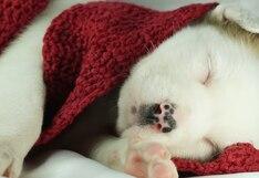 ¿Sueñan igual que los humanos? Esto es lo que pasa por la mente de tu perro cuando duerme
