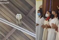 Viral: Coro de una iglesia canta para espantar a lechuza y ella se pone a bailar
