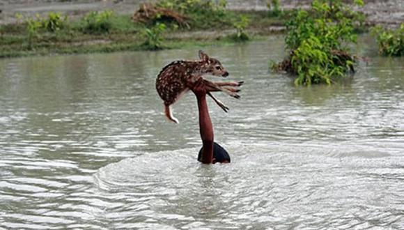 El pequeño Belal realizó un valiente acto desinteresado al arriesgar su vida y salvar a un cervatillo, de las aguas de un profundo río.| Foto: Carters New Agency