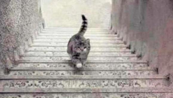 Responde qué es lo que hace el gato, sube o baja, para conocer cómo afrontas tus problemas en la actualidad. (Foto: Facebook/iProfesional)