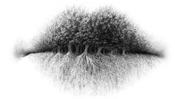 ¿Raíces, árboles o labios? El test viral que revela secretos de tu forma de ser. (Foto: la100.cienradios.com)
