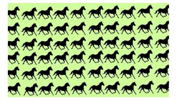 El reto viral presenta a un conjunto de caballos ubicados en orden la misión es hallar a seis de ellos que son diferentes.