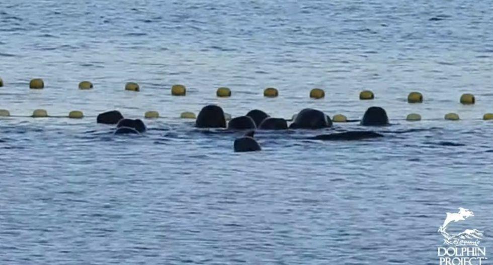 En esta foto podemos ver al grupo de delfines. (Captura video de YouTube)