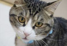 El inesperado final de una pelea de gatos sorprende a usuarios en las redes