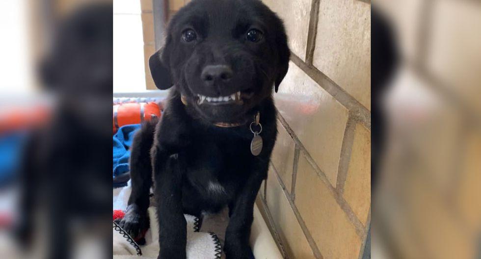 Su dulce sonrisa lo convirtió en un fenómeno viral que acumula miles de 'me gusta' en redes sociales. (Foto: Facebook/Humane Society of Northwest Louisiana)