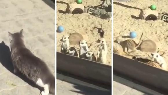 Las suricatas mostraron una reacción que a muchos usuarios en YouTube causó gracia. (Foto: RT en Español   YouTube)