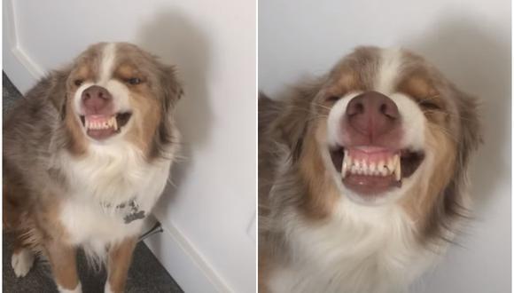 Nova es una perrita que se volvió viral en Internet por su singular reacción cuando le llaman la atención. La grabación acumula miles de reproducciones. (Foto: ViralHog / YouTube)