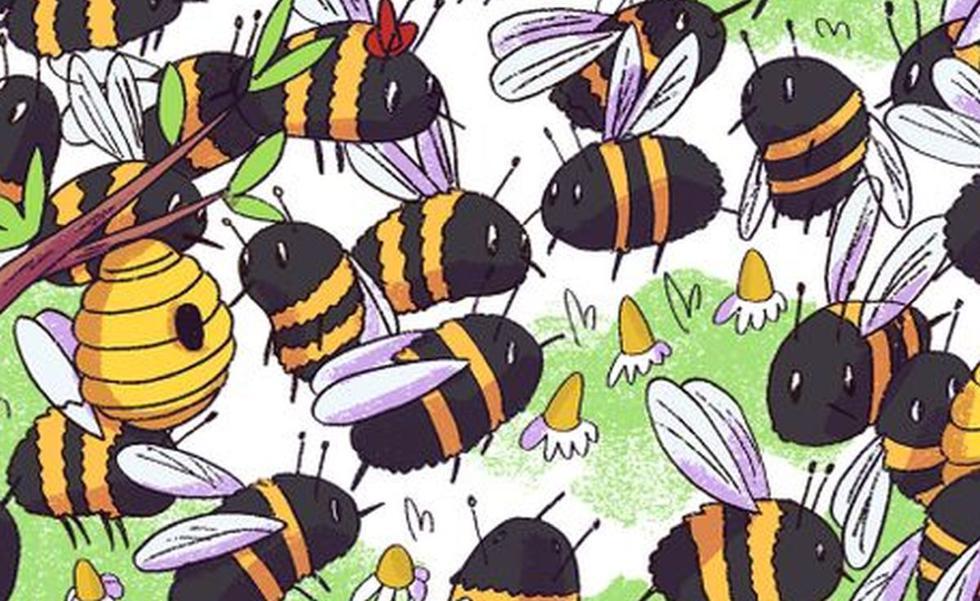 Encuentra al oso oculto entre las abejas en el siguiente reto viral (Foto: Facebook)