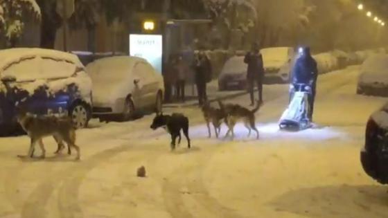 es-papa-noel-hombre-es-viral-por-pasear-a-sus-mascotas-con-trineo-video