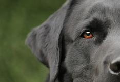 ¡El mejor amigo! Perrito  salva de morir a su amiga sorda con esta gran acción