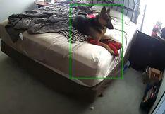 Cámara de seguridad muestra cómo se porta un perro al estar solo en casa y echar de menos a su amo