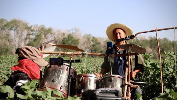 Un video viral muestra cómo un agricultor de algodón mezcla su trabajo con su pasión por tocar la batería. | Crédito: Xinhua News