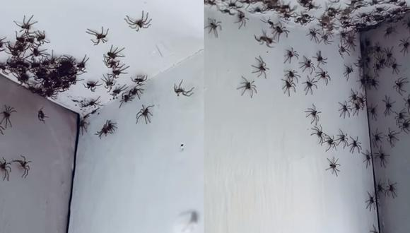 La madre no podía creer lo que había dentro del cuarto de su pequeña hija. Más de 100 arañas caminaban por el techo y las paredes de la habitación.  Foto: Claudia Domrose/Storyful