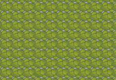 ¿Puedes hallar los nopales sin espinas en la imagen? Solo un 3 % superó este acertijo visual