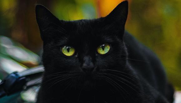 La gata demostró que no le temía a los zorros, algo que cautivó a muchos en YouTube. (Foto referencial - Pexels)