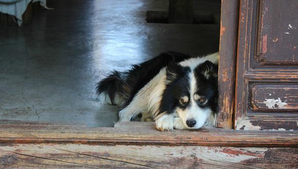 Un perro se volvió viral tras demostrar cuánto extraña a su dueña mientras esta trabaja fuera de casa. (Foto: Referencial / Pixabay)