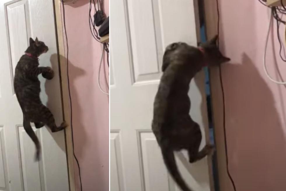 Foto 1 de 5 | El gato protagonizó una llamativa escena que es un éxito en redes sociales. (YouTube: ViralHog)