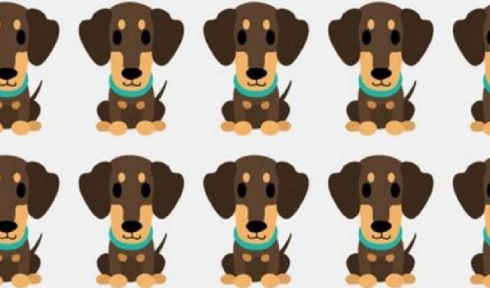 Ubica al perro diferente al resto de este reto viral en la que el 98% falla. (Profesional)