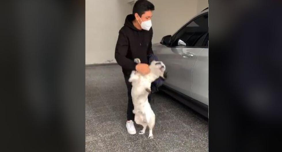 Perro tuvo emotiva reacción al reencontrarse con el novio de su dueña después de mucho tiempo. (TikTok)