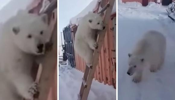 El osezna fue encontraba deambulando por el campamento minero. Hoy vive en el zoológico de Moscú. (Foto: RT Play en Español | YouTube)
