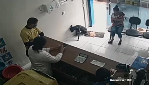 Un perro entró solo y herido a una clínica veterinaria de Brasil pidiendo ayuda. (Foto: Jornal tv / YouTube)