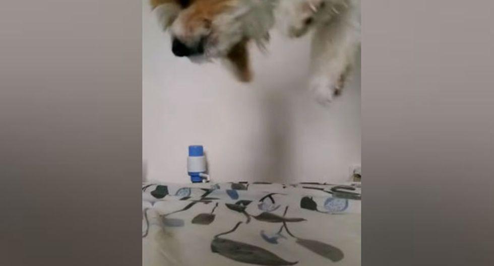 Una vez que lo hizo, procedió a alzar nuevamente a su can. (YouTube: ViralHog)