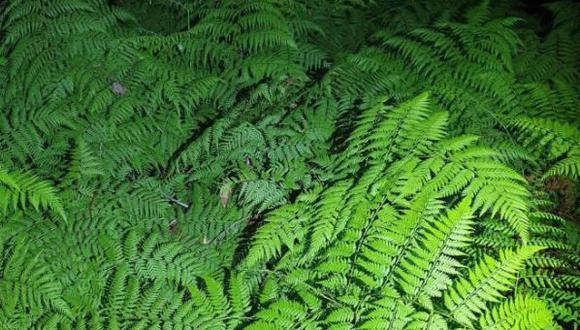 Este animal se encuentra escondido entre las ramas de un árbol. En primera instancia solo era una imagen, pero la agudeza visual lo convierte en un reto viral.