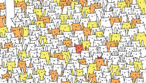 Tu misión, si decides aceptarla, es hallar al conejo entre los gatos. (Foto: dudolf.com)