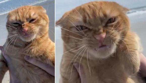 La reacción de un gato al ir por primera vez a la playa no deja de ser comentada en Internet. (Foto: Pumpkin the Catt official / Facebook)
