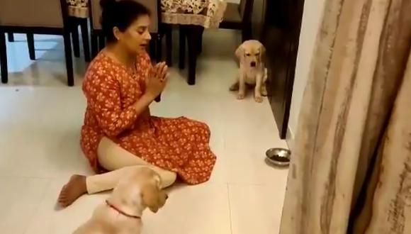 Un video viral muestra cómo una mujer logró enseñarles a sus perritos a orar antes de ingerir los alimentos. | Crédito: @mathur_vaishali / Twitter