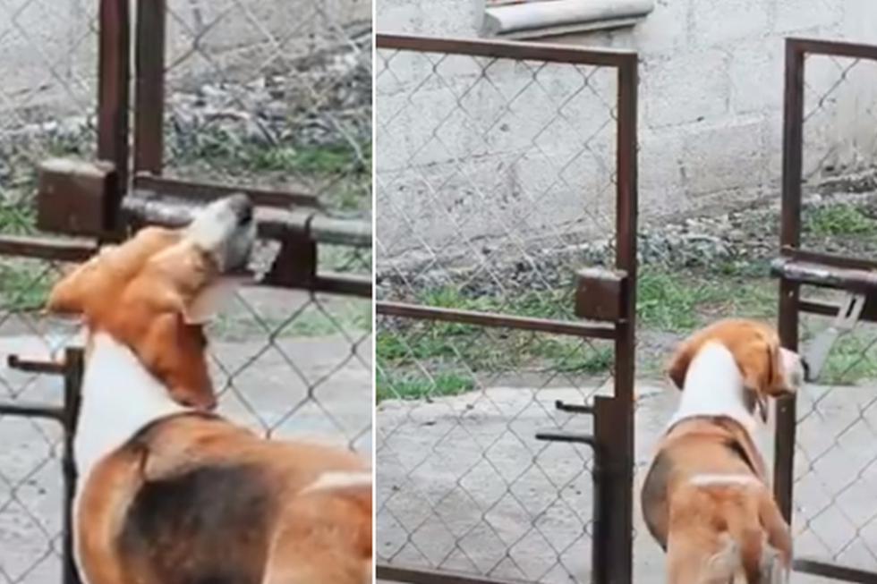El perro no se complicó mucho para abrir la reja y salir a jugar. (Twitter: @ErgoProxy95)