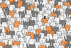 ¿Puedes superar este acertijo visual? Debes ubicar el conejo en solo 20 segundos