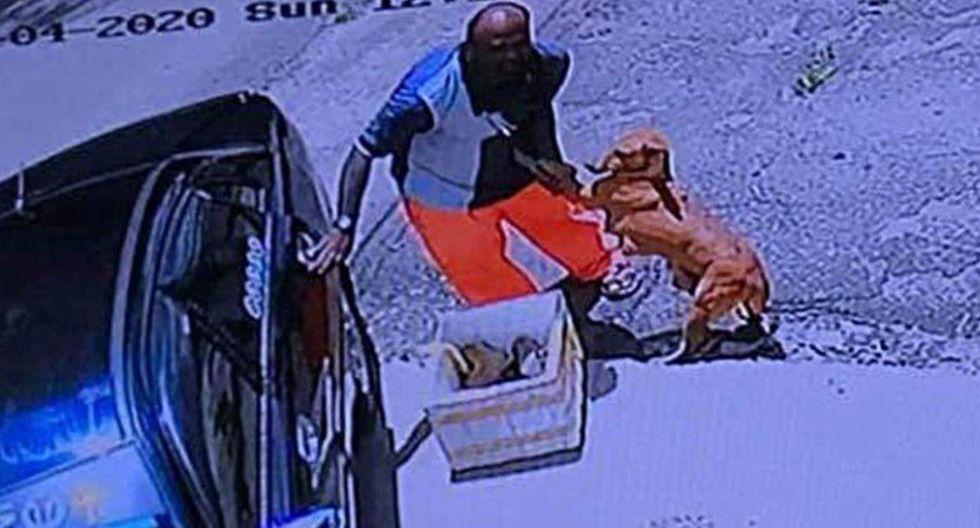 Las imágenes muestran a la perrita totalmente desesperada. (Foto: Facebook de Kluang Johor Stray Dog Home)