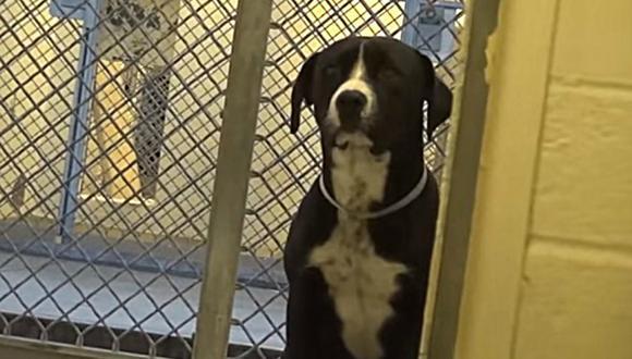 Benny es un perro de Estados Unidos que se volvió viral por su emotiva reacción tras abandonar el refugio en el que vivió durante varios meses. (Foto: DailyPicksandFlicks / YouTube)