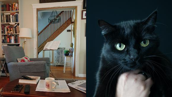 El gato negro oculto a plena vista en la foto del reto viral se convirtió en lo más compartido en las redes sociales. | Crédito: u/pizzaslayer111 / Reddit.