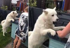 Los celos de un perro al notar que su propietaria acaricia a otro can