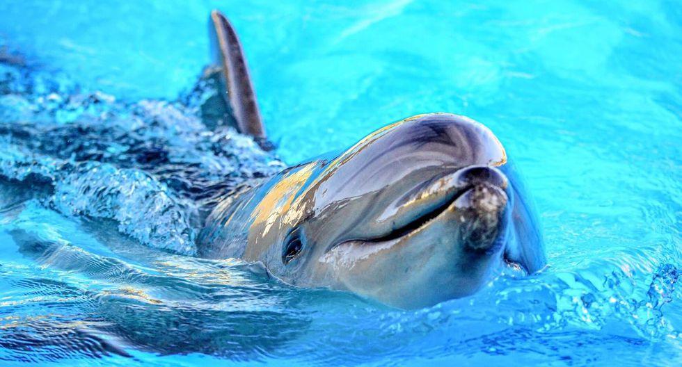 Los delfines son animales que suelen causar ternura. (Foto referencial: Pixabay)